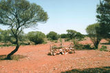 Picture relating to Mount Magnet - titled 'Mount Magnet'