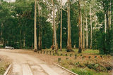 Picture of / about 'Bunyip State Park' Victoria - Bunyip State Park; Dyers camp/picnic ground