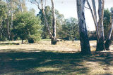 Picture of / about 'Cobram' New South Wales and Victoria - Cobram State Forest - Tocumwal: Bretnalls Beach