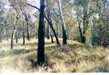 Picture relating to Shepparton-Mooroopna - titled 'Shepparton-Mooroopna State Forest'