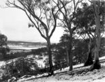 Picture relating to Ainslie - titled 'Record fall of snow - North end of Braddon under snow, from Mt Ainslie .'