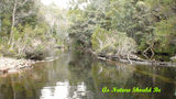 Picture relating to Dover - titled 'Wilderness Water Rainforest Lune River In The Far South Of Tasmania'