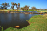 Picture relating to Capel River - titled 'Weir on Capel River WA'