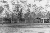Picture relating to Taroom - titled 'Stockyard at Taroom Settlement, 1911'