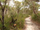 Picture relating to Darkes Forest - titled 'Track to Maddens Creek 1'