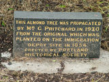 Picture relating to Portland - titled 'Portland Historic Almond Tree Information Stone'