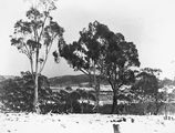 Picture relating to Braddon - titled 'Record fall of snow - Braddon under snow, from Mt Ainslie .'