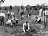 Picture relating to Beerwah - titled 'Planting pine tree seedlings at Beerwah, Queensland, 1932'