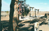 Picture relating to Tibooburra - titled 'Tibooburra'