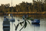Picture relating to Fitzroy River - titled 'Fitzroy River'
