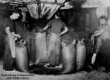 Picture relating to Nambour - titled 'Men packing sugar at the Moreton Central Sugar Mill, Nambour, 1938'