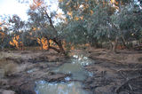 Picture relating to Nebine Creek - titled 'Nebine Creek'
