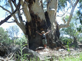 Picture of / about 'Moulamein' New South Wales - Edwards River,Moulamein,nsw.