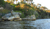 Picture relating to Claremont - titled 'Swan River at Claremont WA'
