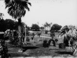 Picture relating to Brisbane - titled 'View of Albert Park from Wickham Terrace, Brisbane, ca.1930'
