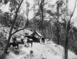 Picture relating to Mount Morgan - titled 'Miners' camp at Mount Morgan, ca.1888'