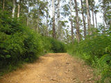 Picture relating to Porongurup National Park - titled 'Track going to Devils Slide'