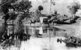 Picture relating to Canungra Creek - titled 'Ford at the Canungra Creek Crossing, ca. 1908'