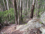 Picture relating to Mount Imlay - titled 'Mount Imlay Walking Track'