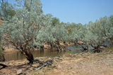 Picture relating to Durack River - titled 'Durack River'