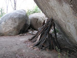 Picture relating to Tidbinbilla Nature Reserve - titled 'Hanging Rock - example aboriginal shelter'