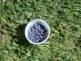 Picture relating to Stanley - titled 'Stanley Blueberries'