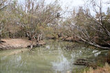 Picture relating to Lachlan River - titled 'Lachlan River'