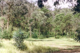 Picture relating to Hickey Creek Track - titled 'Hickey Creek Track bush camps'