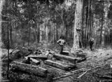 Picture relating to Queensland - titled 'Timber-getter at work, ca. 1900'
