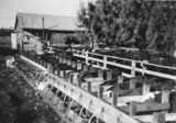 Picture relating to Durong - titled 'Calves being fed on Cooee station, Durong, 1953'