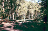 Picture relating to Allenvale - titled 'Allenvale, Angahook-Lorne State Park, Allenvale Mill Camp Ground'