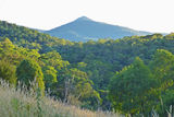 Picture relating to Bogong Mountain - titled 'Bogong Mountain'