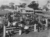 Picture relating to Beaudesert - titled 'Horse auction at the railway yards in Beaudesert, ca. 1912'