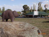 Wombat on his rock 2