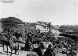 Picture of / about 'Mount Garnet' Queensland - Working camels near the mines at Mount Garnet, Queensland, ca. 1901
