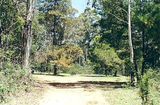 Picture of / about 'Toombullup' Victoria - Toombullup State Forest: Toombullup East School Site camp ground