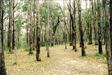 Picture of / about 'Bunyip State Park' Victoria - Bunyip State Park: Old Tynong Camp