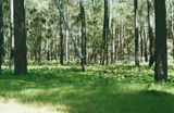 Picture relating to Tuart Forest National Park - titled 'Tuart Forest National Park'
