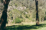 Picture relating to Dargo River - titled 'Dargo River, State Forest, Ewan's Flat'