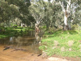 Picture relating to Willochra Creek - titled 'Willochra Creek'