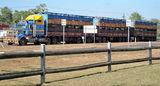 Picture relating to Coolalinga - titled 'Cattle Roadtrain Coolalinga'