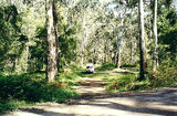 Picture relating to Toombullup - titled 'Toombullup State Forest: Spring Creek camp'