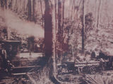 Picture relating to Manjimup - titled 'Manjimup Mill Train on log line'