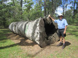 Picture relating to Benarkin - titled 'Tallowwood log'