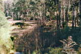 Picture relating to Woods Point - titled 'Woods Point; Scott Camp Ground, State Forest'